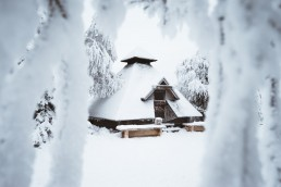 snow covered cabin framed by a snow covered tree