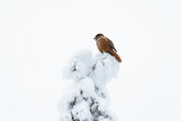 bird on top of a snow covered tree