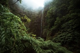 waterfall surrounded by green vegetation