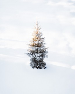 lonely tree in white surroundings