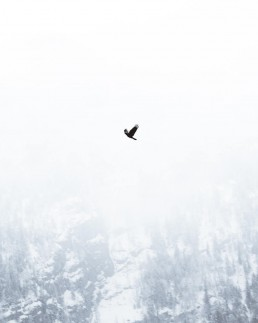 flying bird on a white background