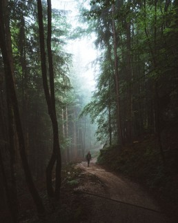 person walking on a path through a foggy forest
