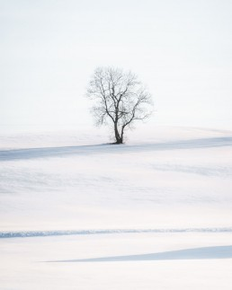 tree on a snow covered hillside