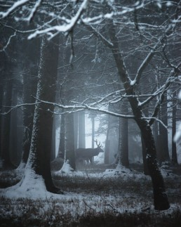 stag standing in the middle of the foggy forest