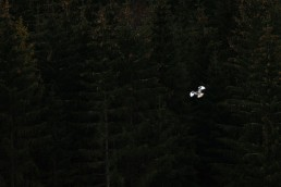 flying bird in front of forest