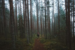 hiker on a path through the forest
