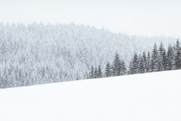 snowy foresty landscape