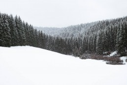 snowy landscape with dark trees