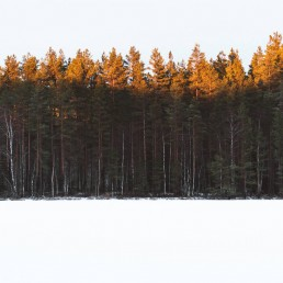 forest near a snow covered lake