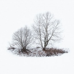 two trees standing in a snowy environment