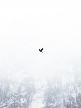 bird flying in front of foggy mountain