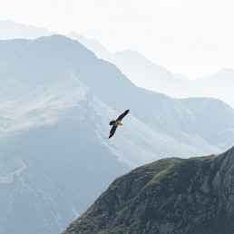 Centered bird flying above a mountain range