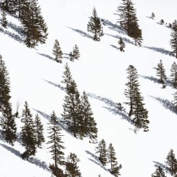 Trees on a snowy hillside casting shadows