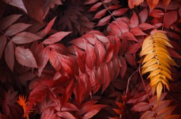 picture of infrared plants